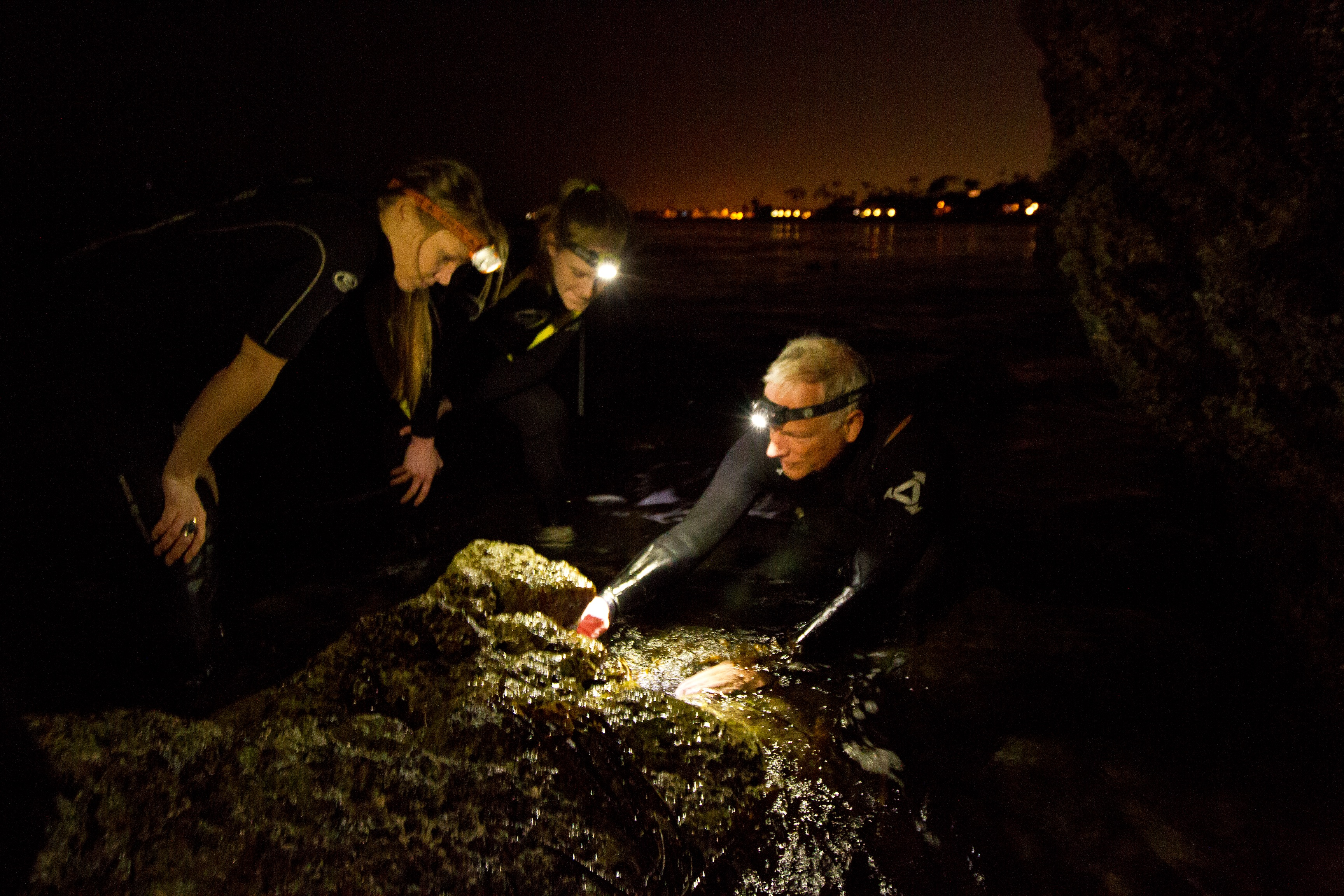 Professor Bill Wright and marine biology students wade into the waters off Laguna Beach to study limpets, the subject of a video he made with dance Professor Robin Kish. (Photo/Panther Productions)