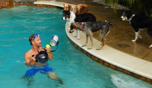 man in pool next to dogs