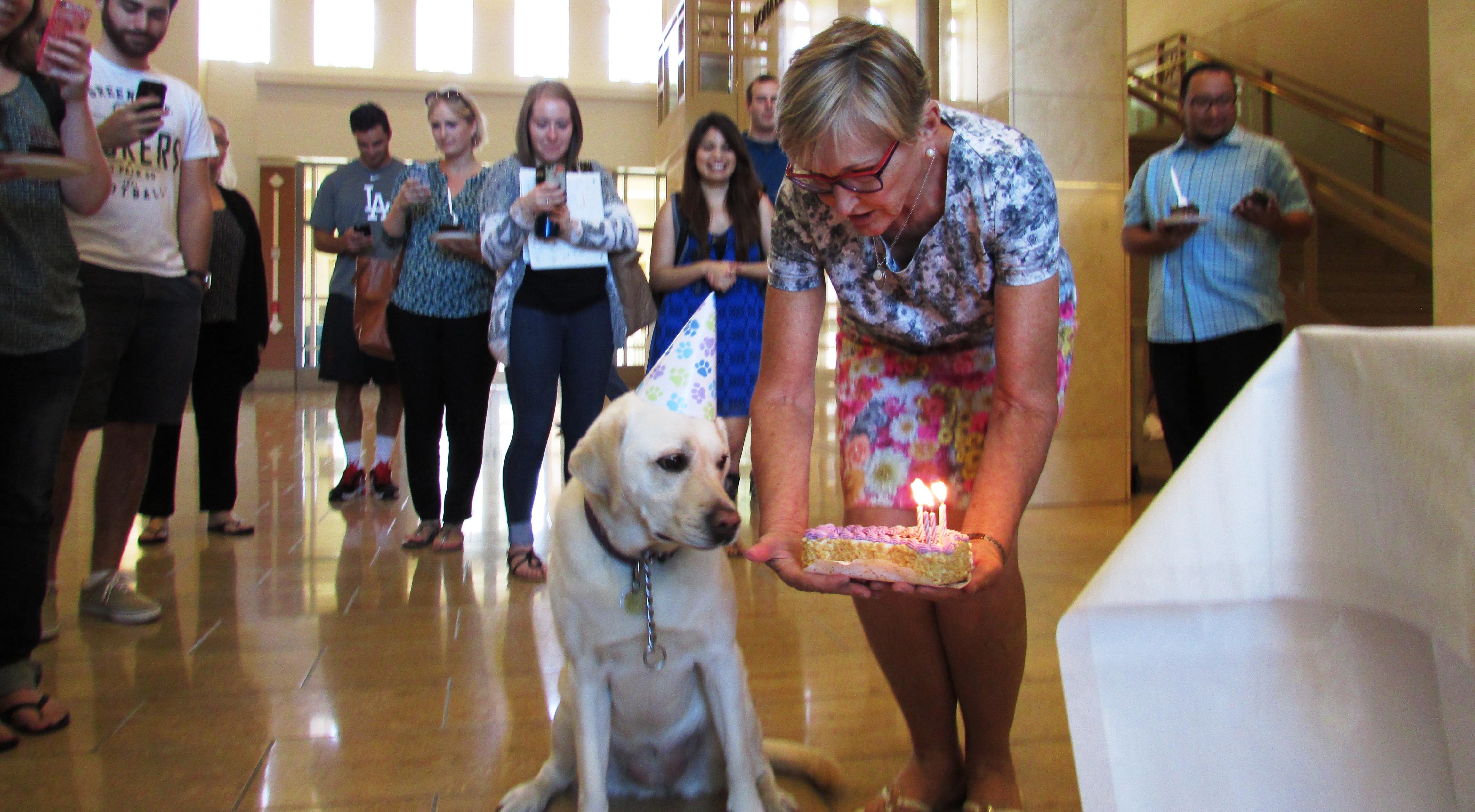 woman giving dog cake