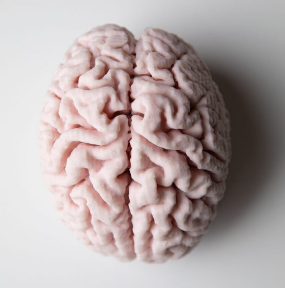 3d printed brain