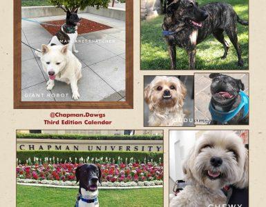 Chapman Dogs