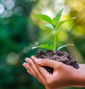 Hands holding growing seedlings.