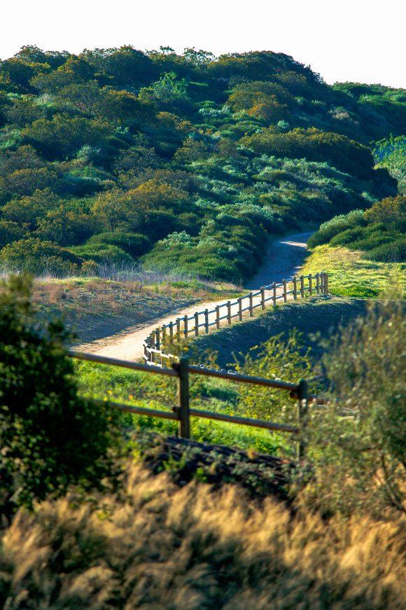 Image of trail leading through foliage in Santa Ana Mountains